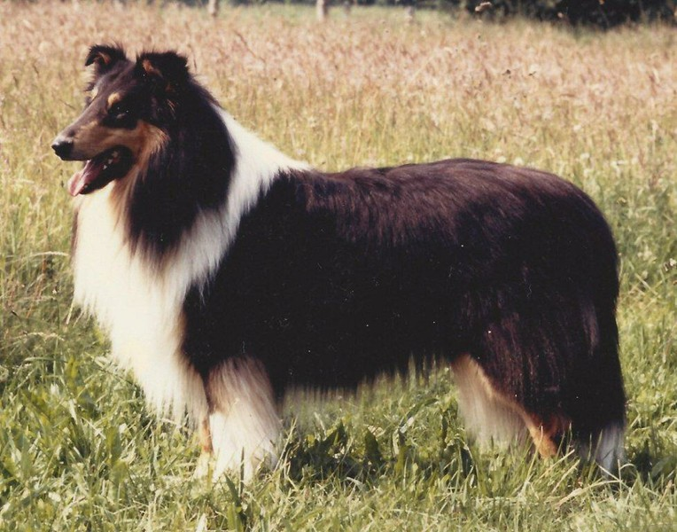 Black Gilmo von der Schönebecker Schweiz