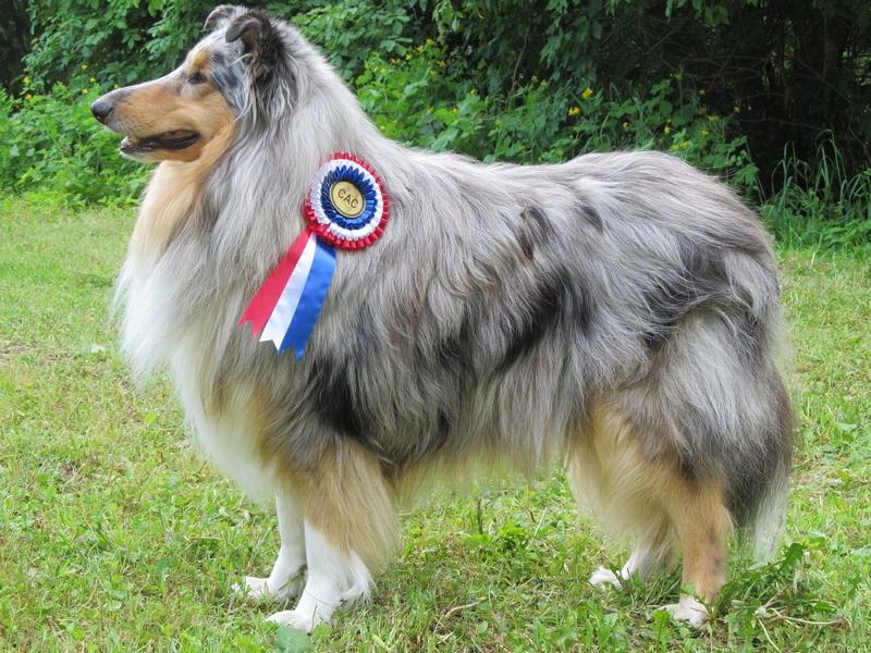 Champion Pardál z Asuanu
