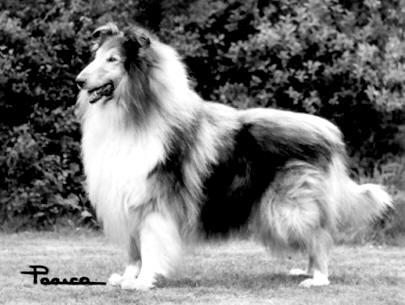 Corydon King Hector