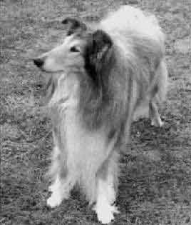 Duntiblae Dogwatch