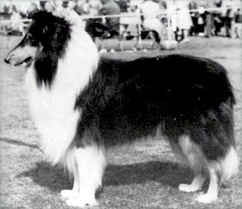 Dog Grooming Rokeby